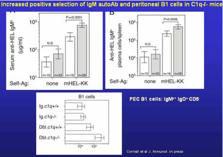 100 anti c1q antibodies concentrations by systemic