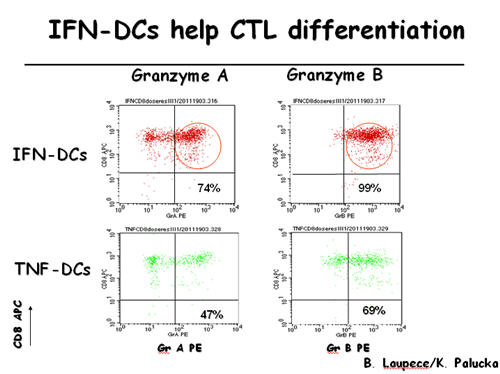 IFN-DCs Help CTL Differentiation